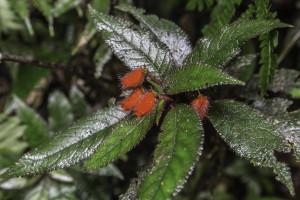 Ecuador_Selva_17