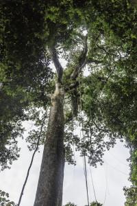 Ecuador_Selva_19