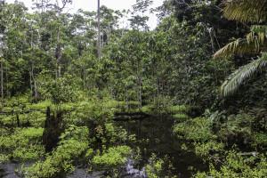 Ecuador_Selva_21