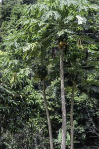 Ecuador_Selva_8