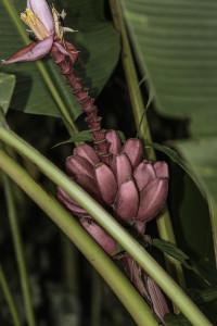Ecuador_Selva_9