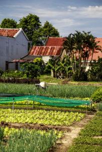 Bio Gemüse Garten
