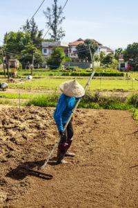 Arbeit im Bio Gemüse Garten