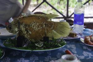 Elefantenohrenfisch grilliert