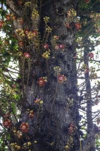 seltsame Blumen am Baum