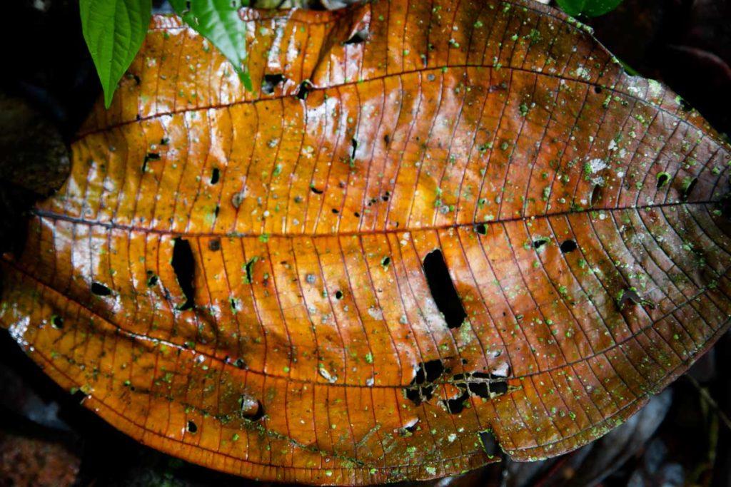 Ecuador Selva 061