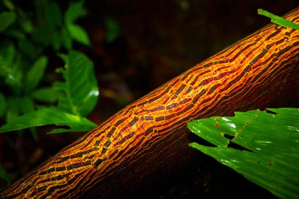 Ecuador Selva 066